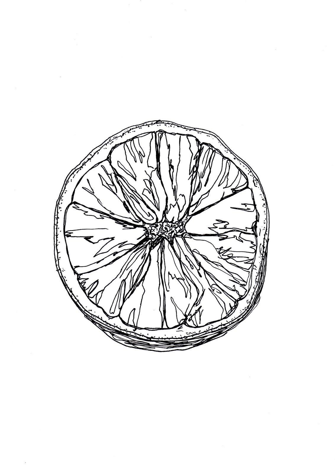 Detailed Observation Orange In Pen And Ink