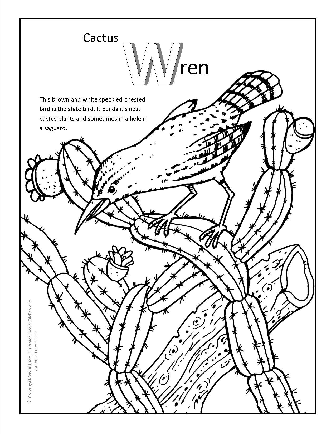 Cactus Wren Coloring Page More Fun Arizona Coloring Pages