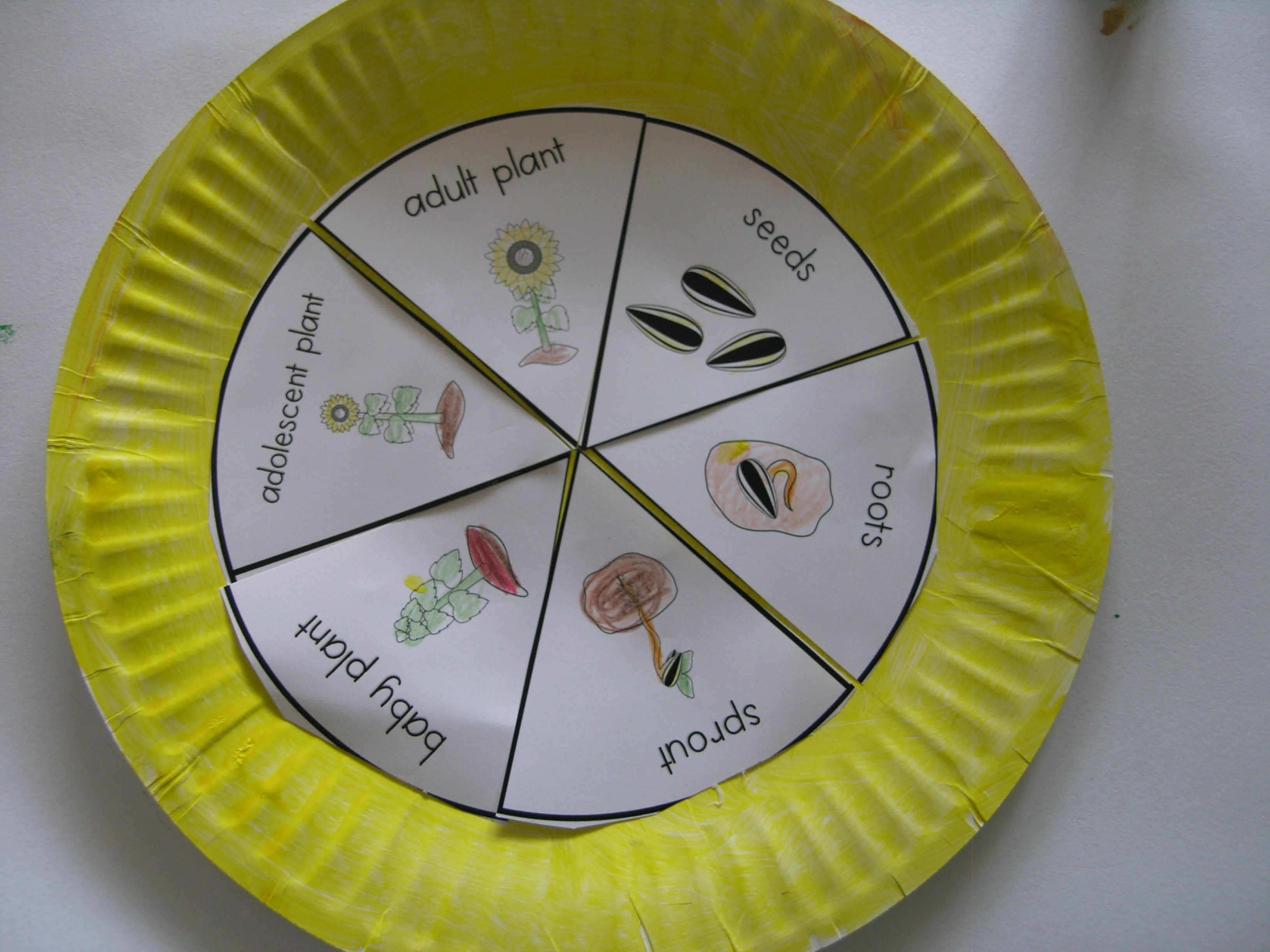 Paper Plate Life Cycles Frog Pumpkin Apple Sunflower And More