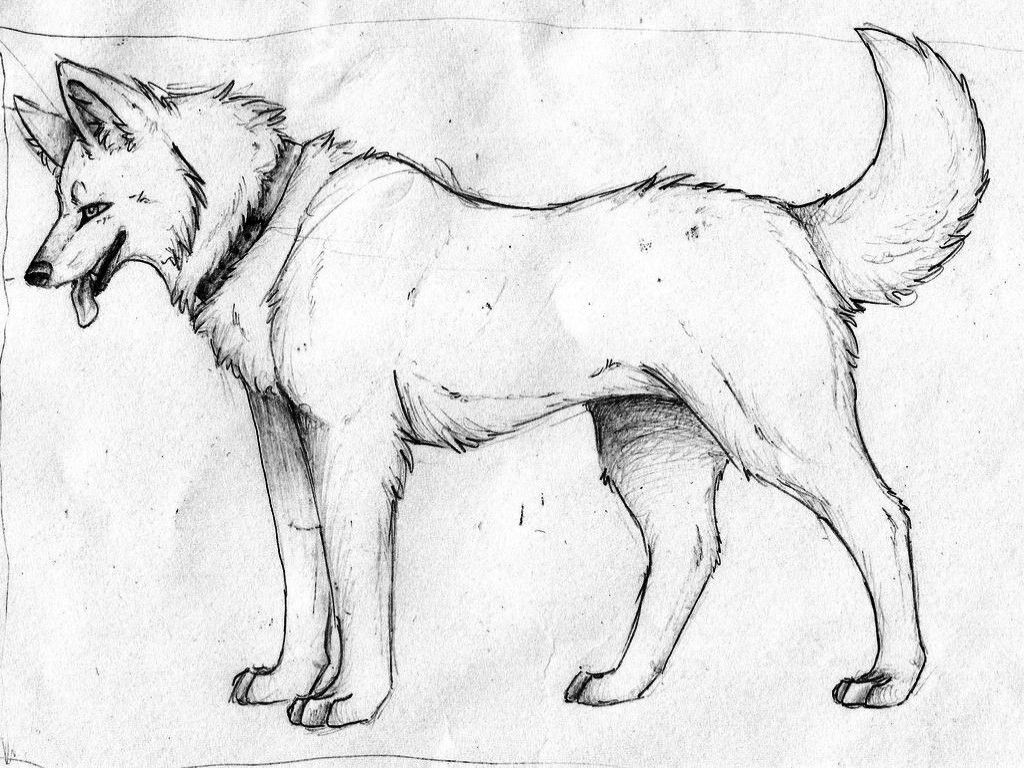 anime wolf wolves and anime on pinterest