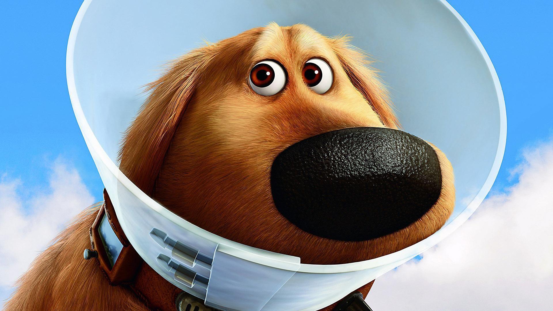 dog pictures Up Dog HD Wallpaper » FullHDWpp Full HD