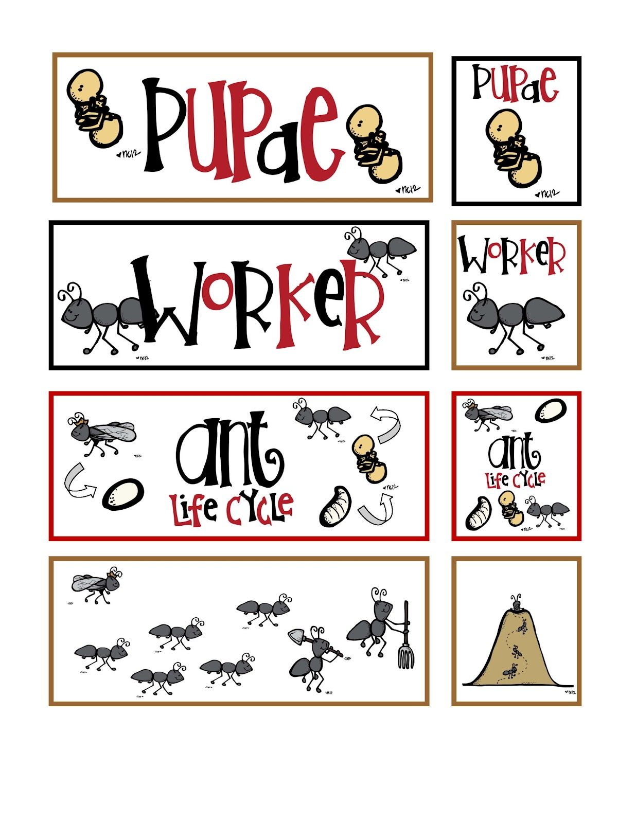 Preschool Printables Ant Life Cycle Printable