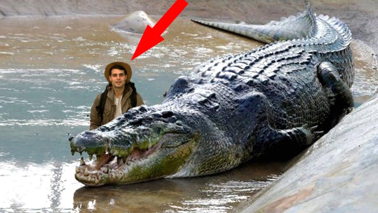 World's Biggest Animal 2015 Largest Animal Giant