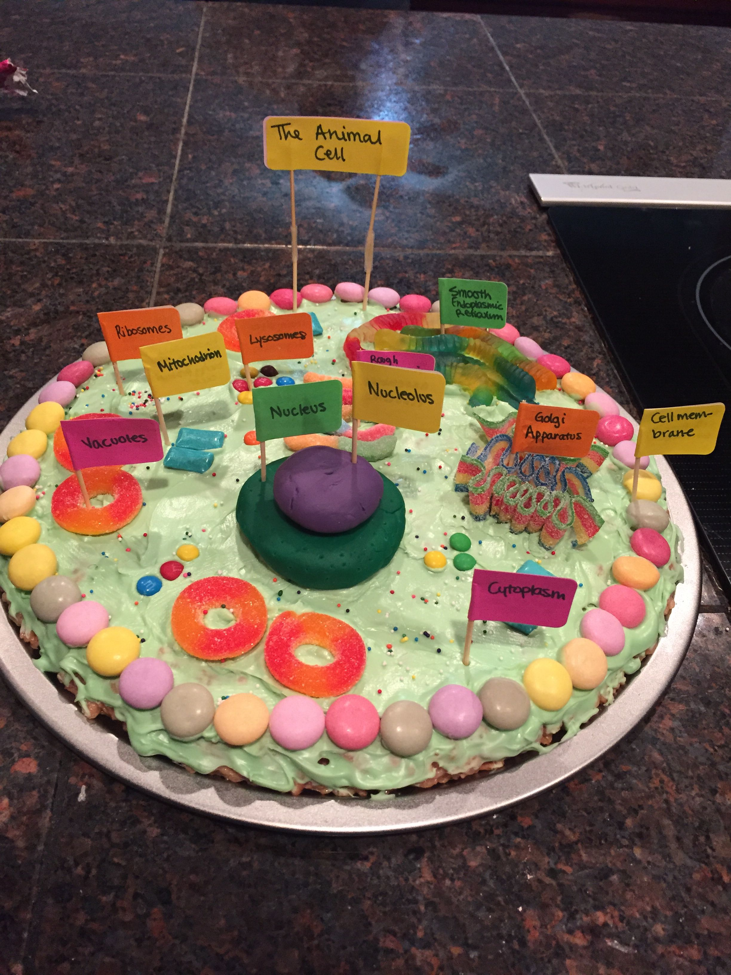 ANIMAL CELL PROJECT! Edible! Project ideas! Pinterest