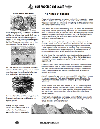 Here's a page of information on how fossils are made