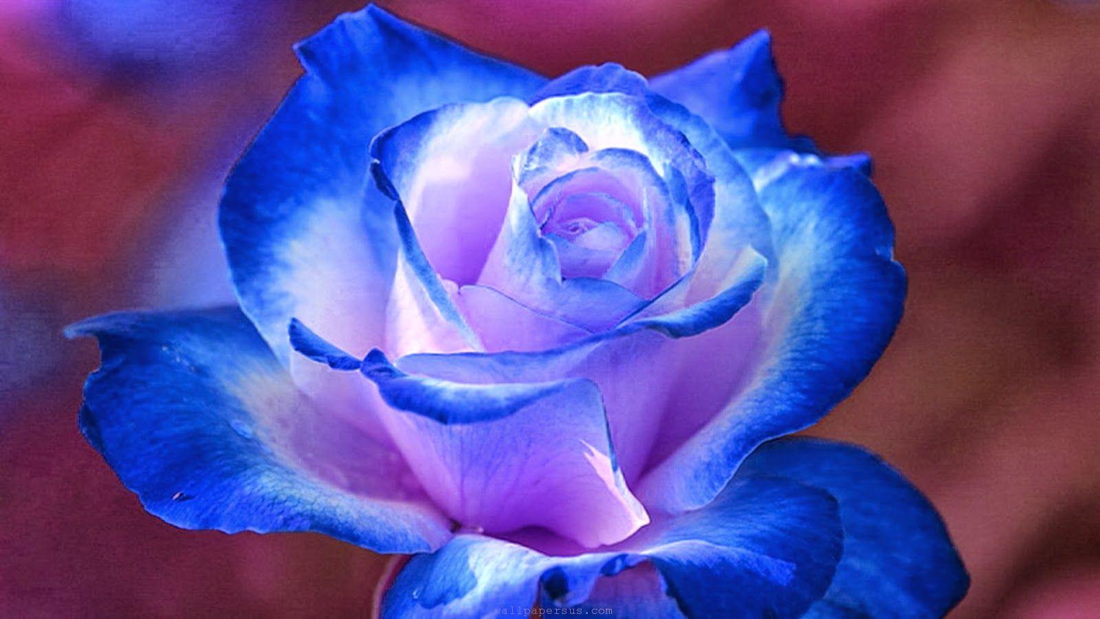 HD Wallpapers Desktop Blue Flower HD Wallpapers sweet