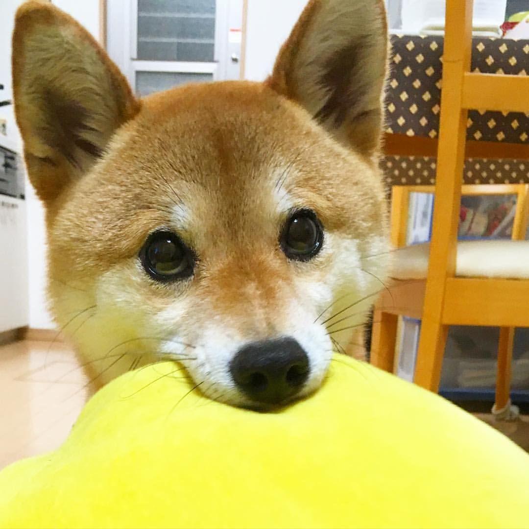 yumohiyo on Instagram animals Pinterest Instagram
