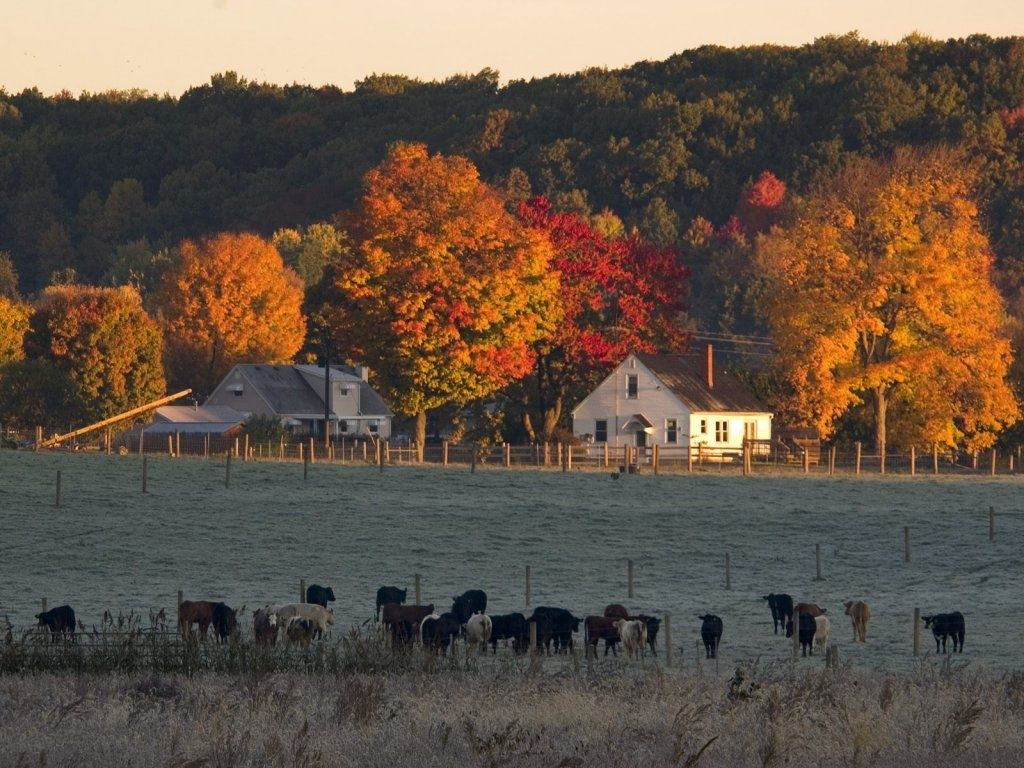 Autumn farm Backgrounds Autumn Farm Scenes farm