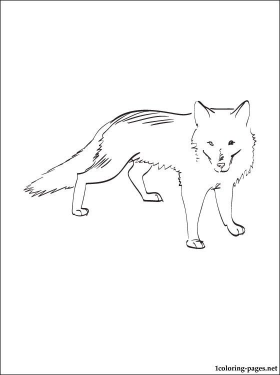 arctic fox coloring pages and free coloring pages on pinterest