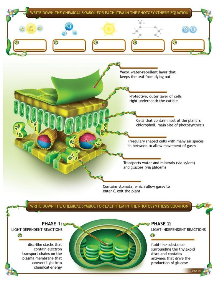 Engage your students with an interactive photosynthesis