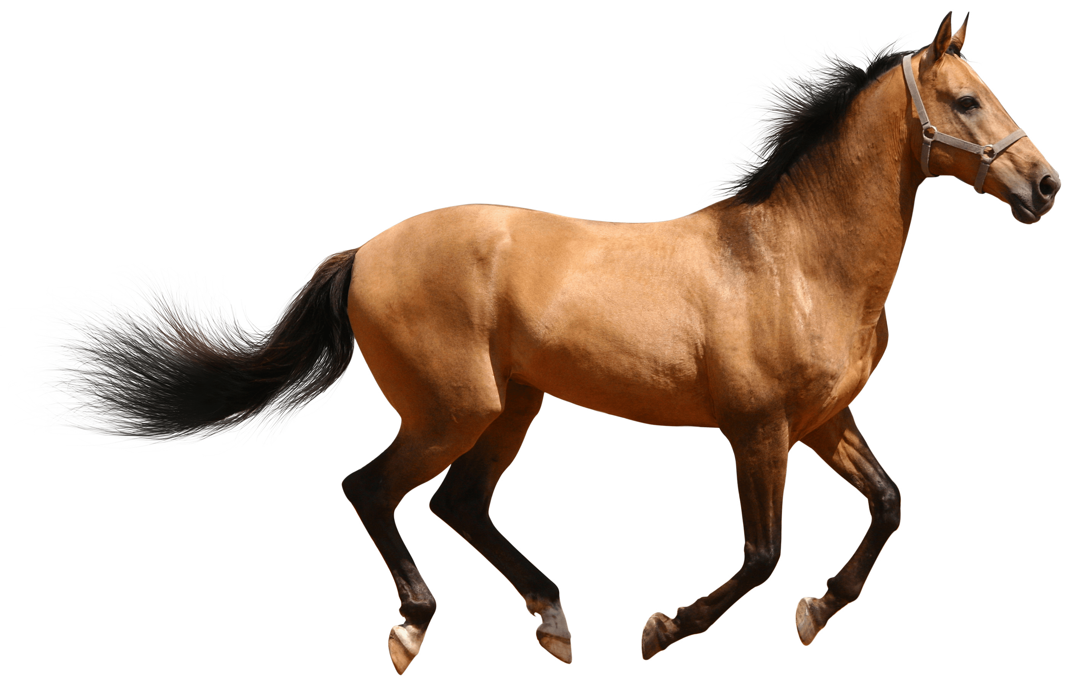 horse - google search | chelsea stewart i hope you love my stuff