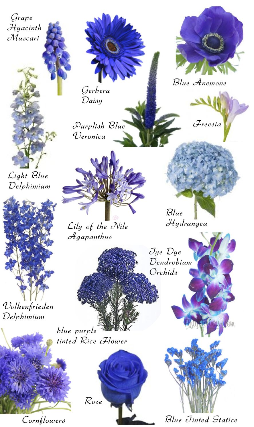 Flower names by Color Flowers, Flower and Blue flowers