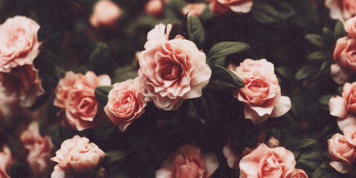 (2) floral header Tumblr Wallpaper Pinterest