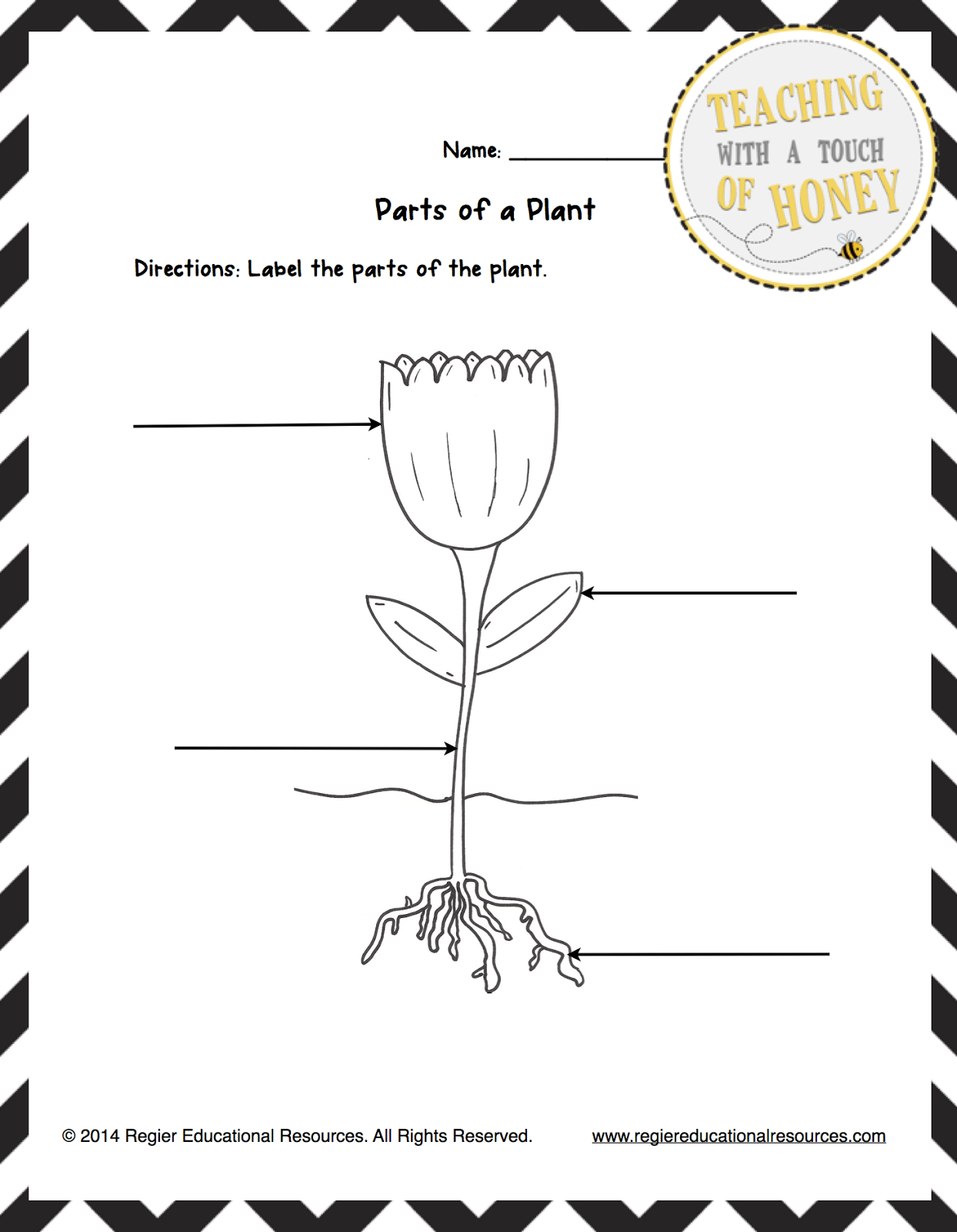 Parts Of A Plant Worksheet For First Grade Or Three