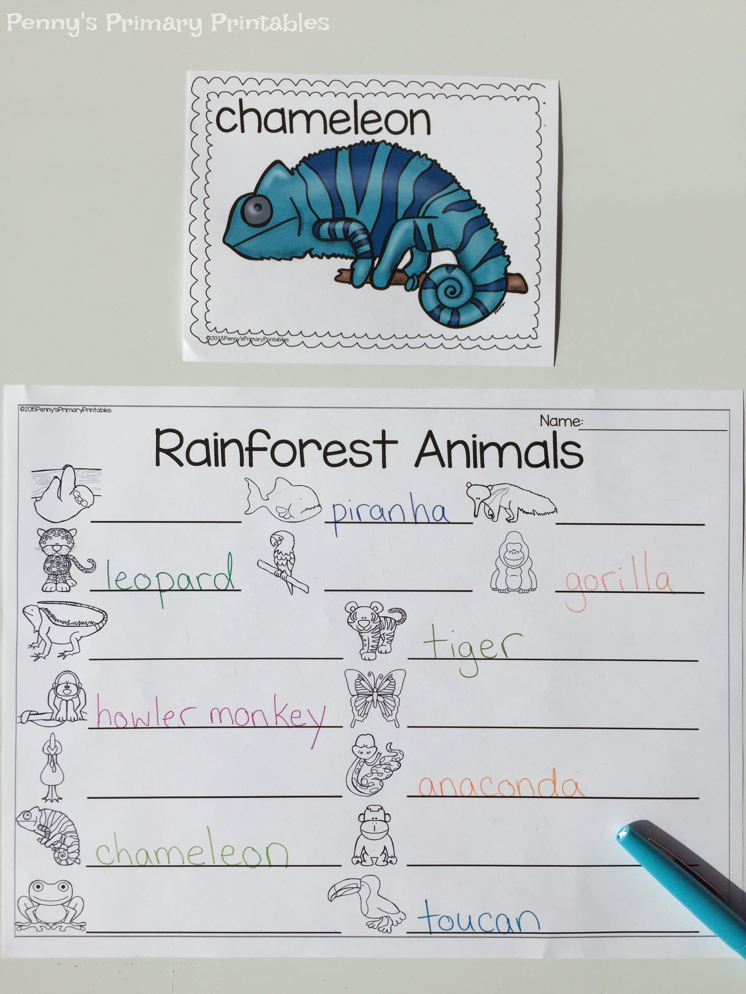 All About Rainforest Animals Practice Reading And Writing