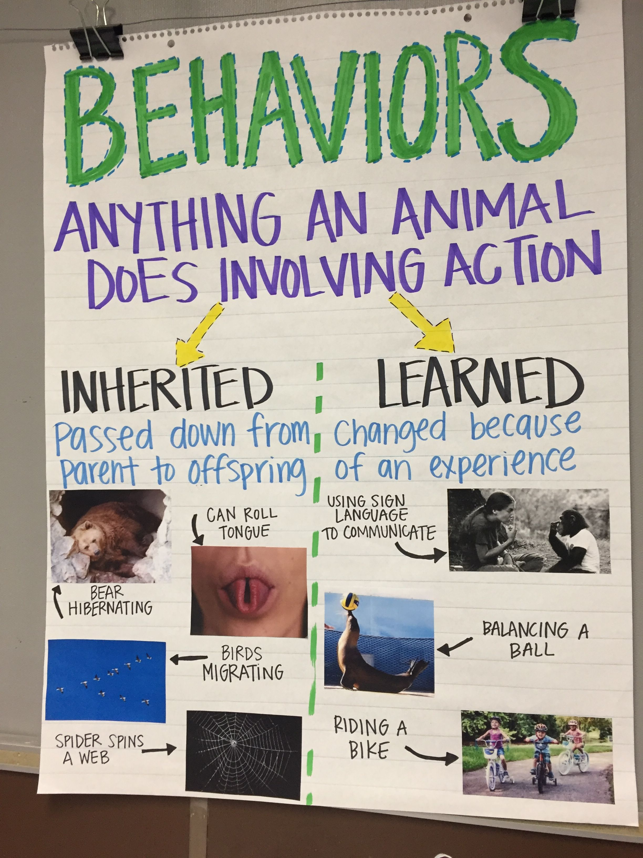 Inherited Traits Behaviors Anchor Chart
