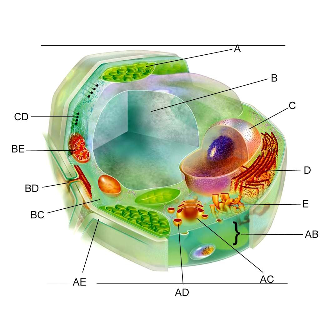 Online Plant Cell Matching Exercise Module 6