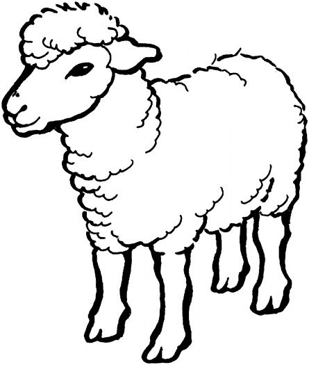 sheep coloring and coloring pages on pinterest