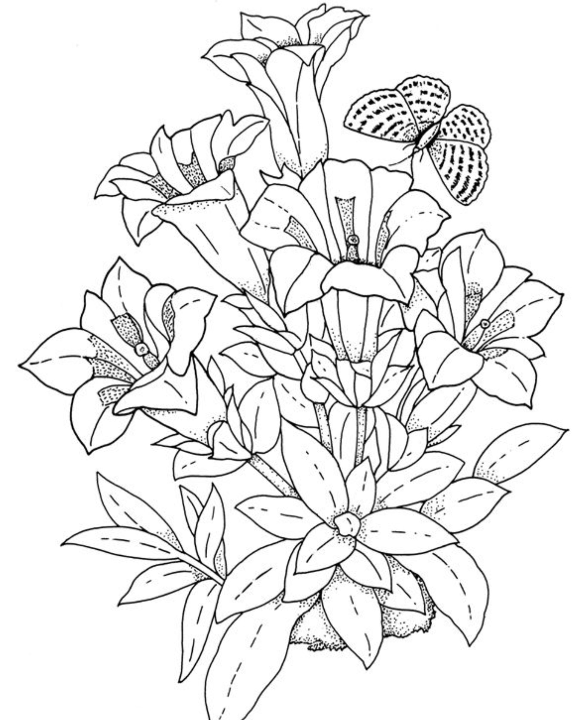 printable adult coloring pages flowers flower coloring pages free