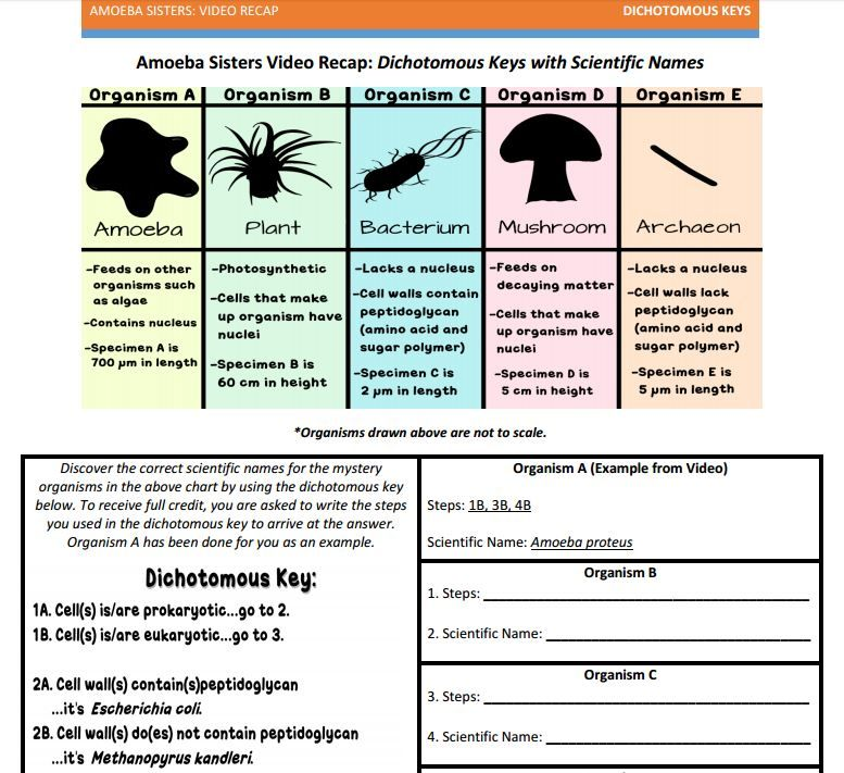 Dichotomous Key handout made by the Amoeba Sisters. Click