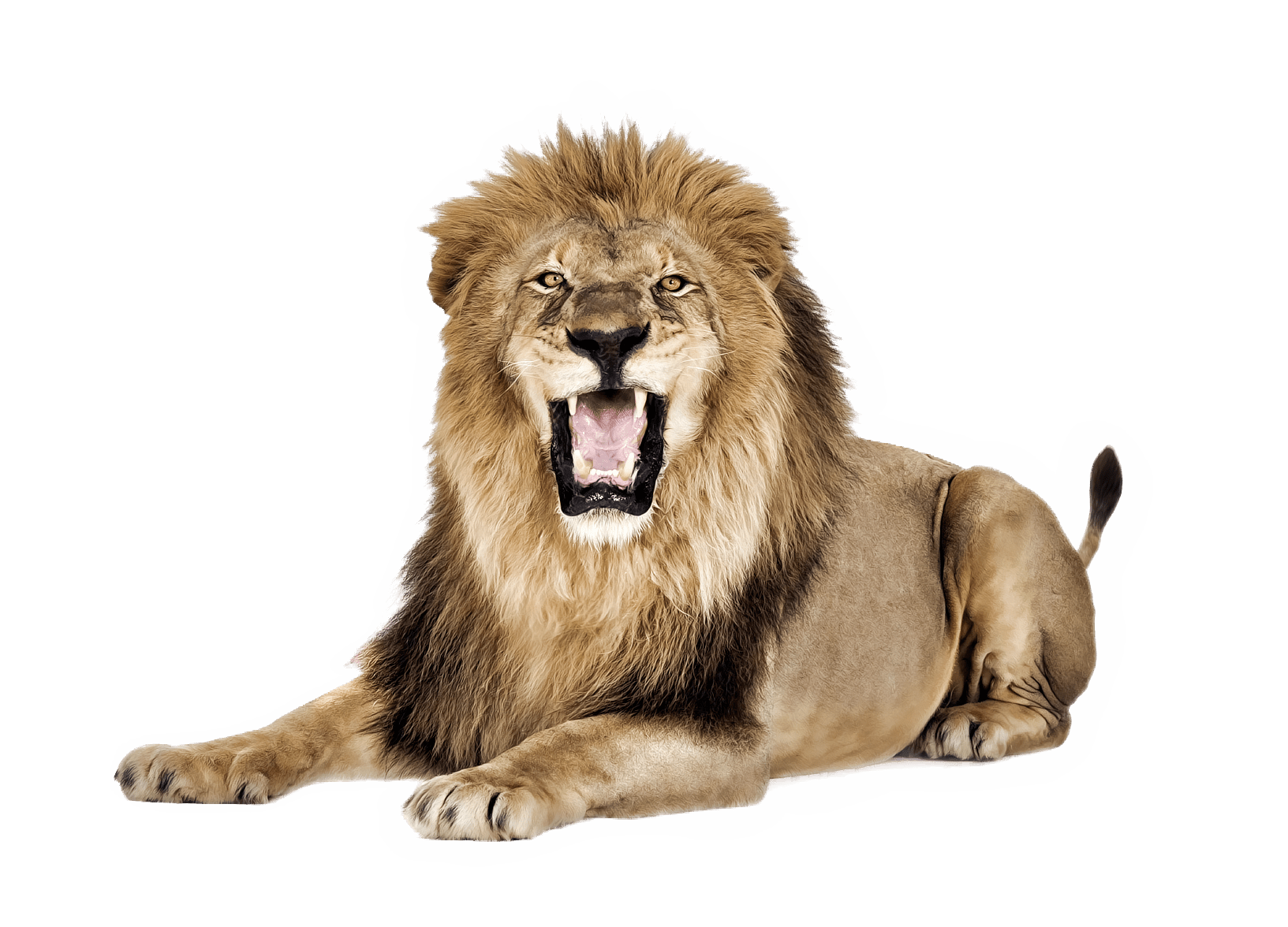 10 Different Types Of Lions with Fact and Pictures Lions