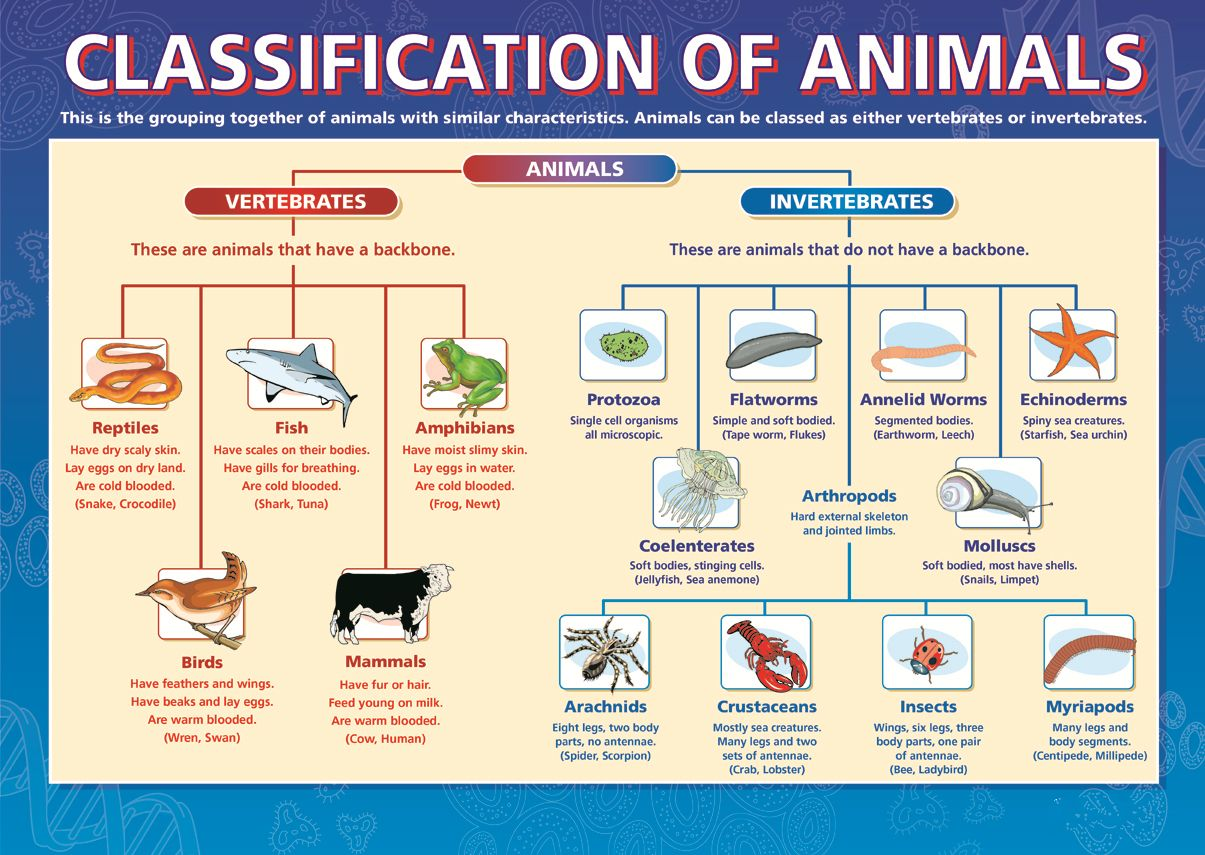 Classification Of Animals Dicotomous Key Taxonomy Biology School Science Biology