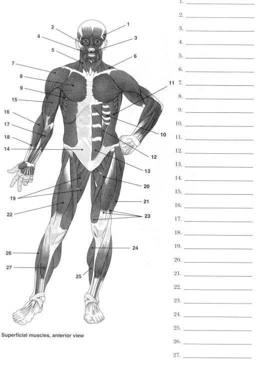 Human Anatomy And Physiology Labeling Exercises – Periodic ...