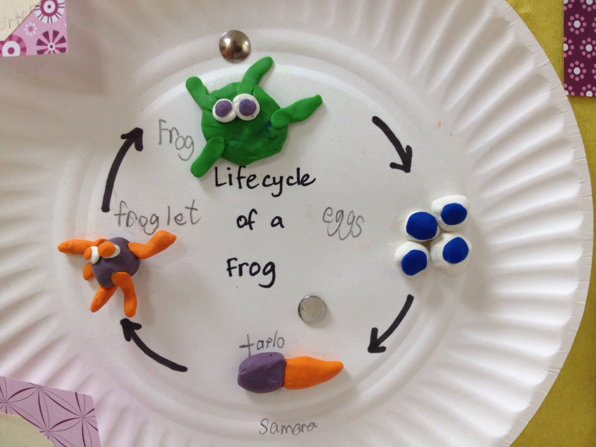 Life Cycle Of A Frog Play Dough Activity