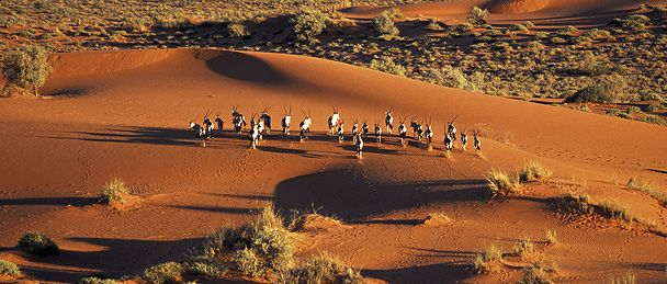 Image result for Kalahari Desert