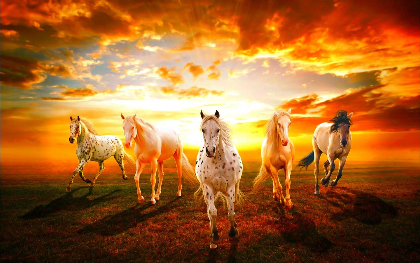 There are many stories of warfare in which a horse has