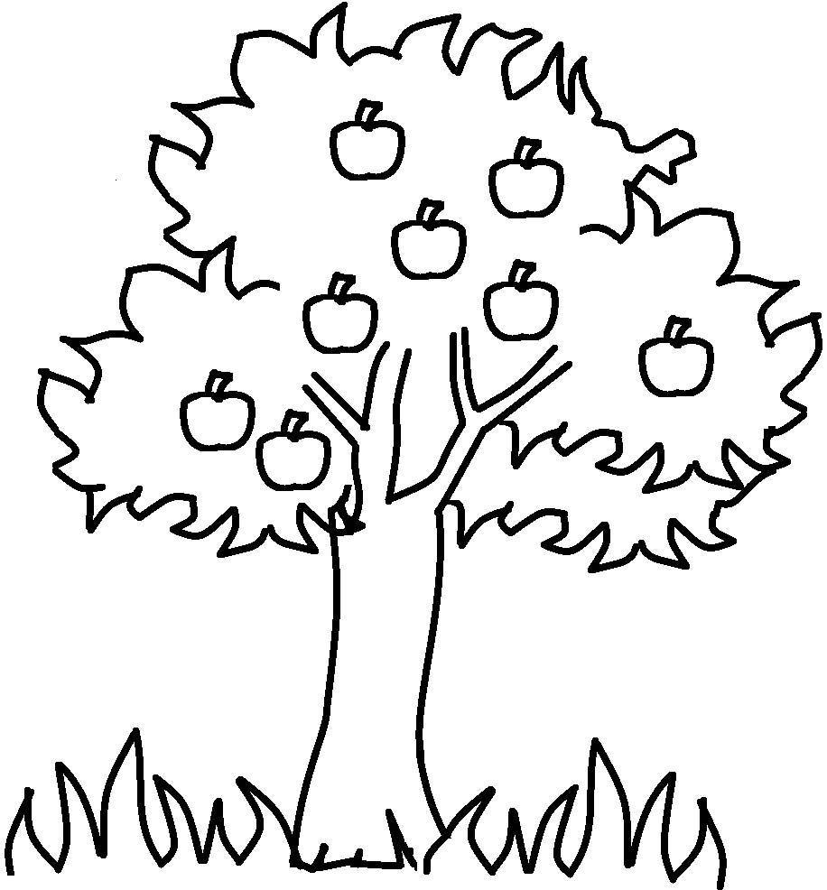 apple tree coloring for kids and coloring on pinterest