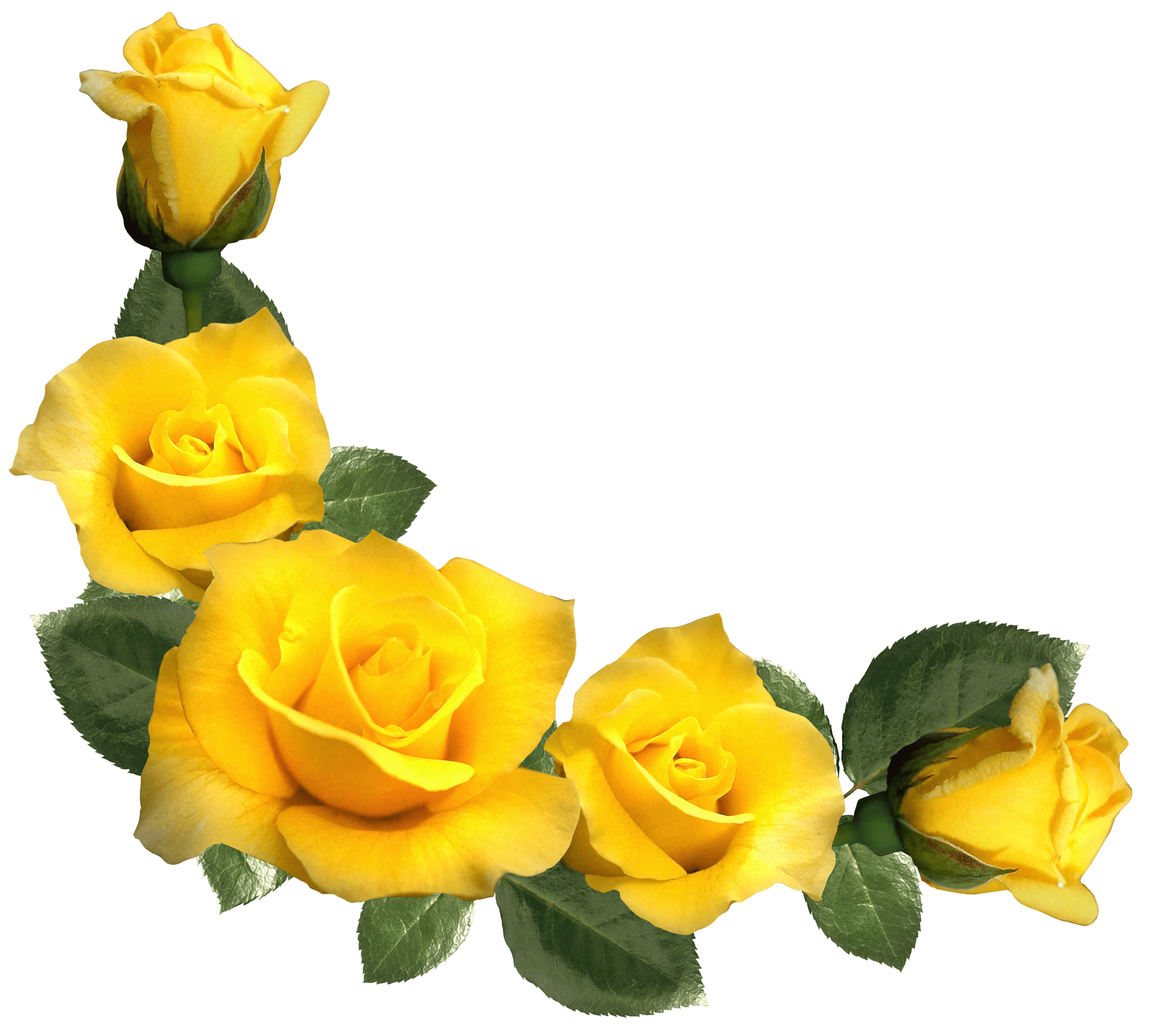 Beautiful Yellow Roses Decor PNG Clipart Image Rose Pics