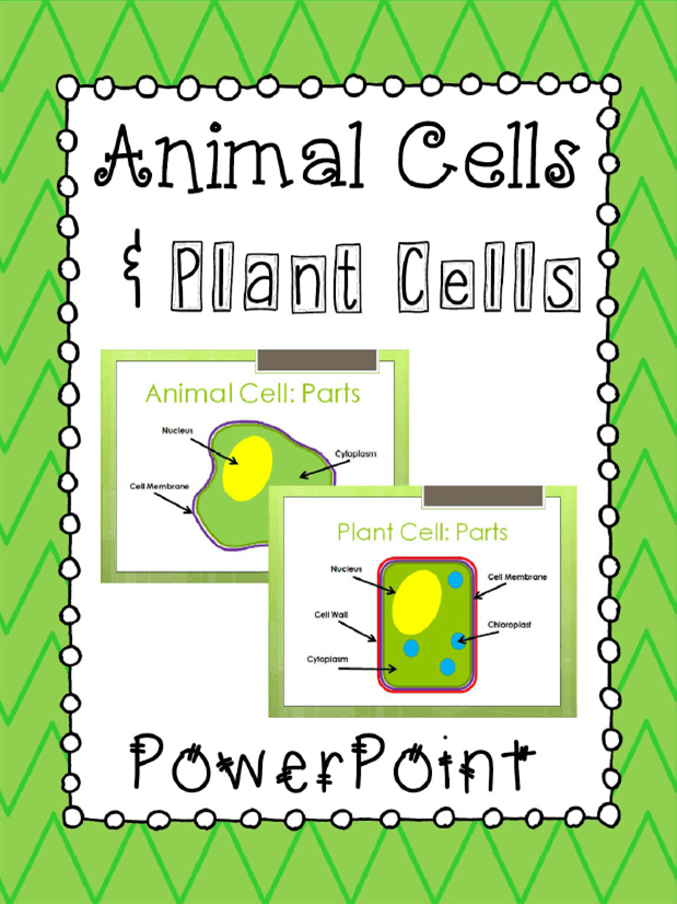 Animal Cells & Plant Cells PowerPoint Presentation