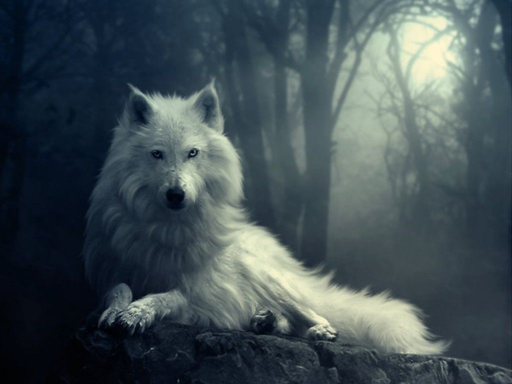 what animal were you in a past life? | wolf, hd wallpaper and