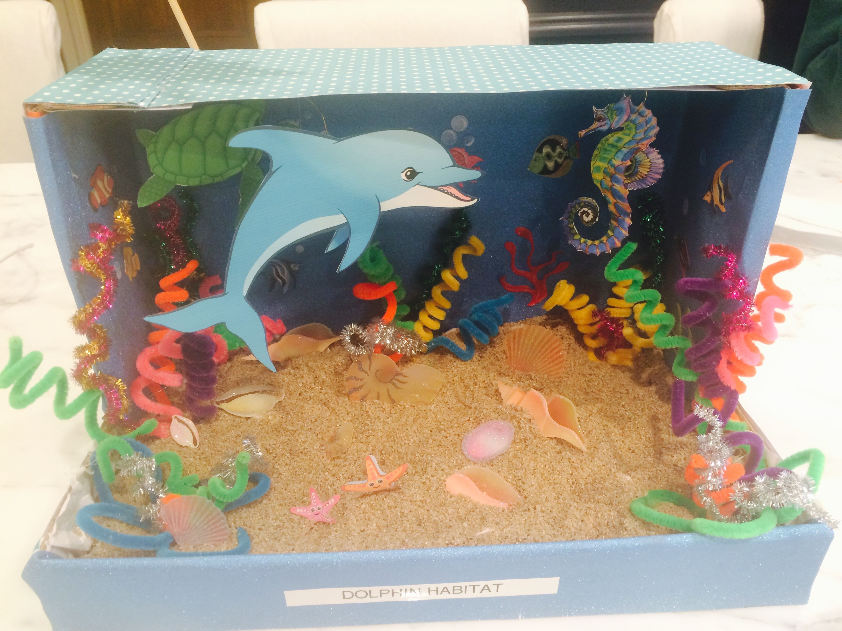 Dolphin Diorama