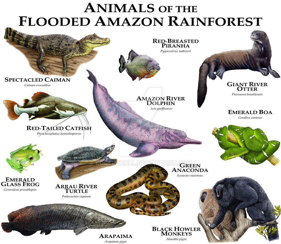 Animals of the Amazon Flooded Rainforest by rogerdhall