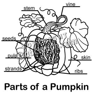 Clip Art: Pumpkin Cut Away B Labeled  preview 1   1st