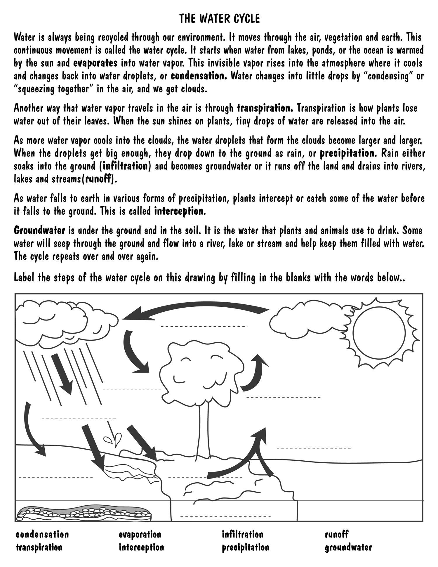 Worksheet Water Cycle Diagram Worksheet Grass Fedjp