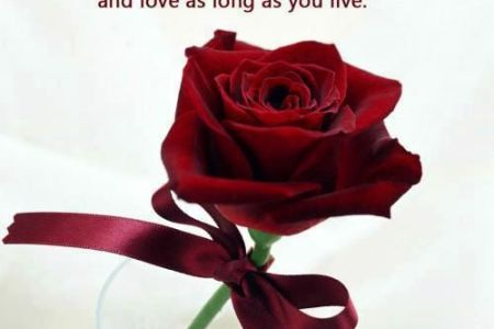single red rose full hd wallpaper shareimages co