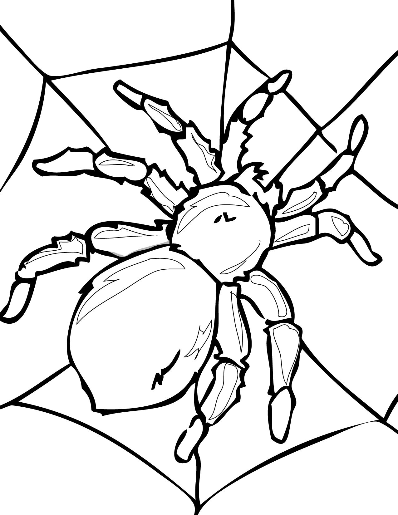 1000 images about spiders on pinterest spider spider webs and