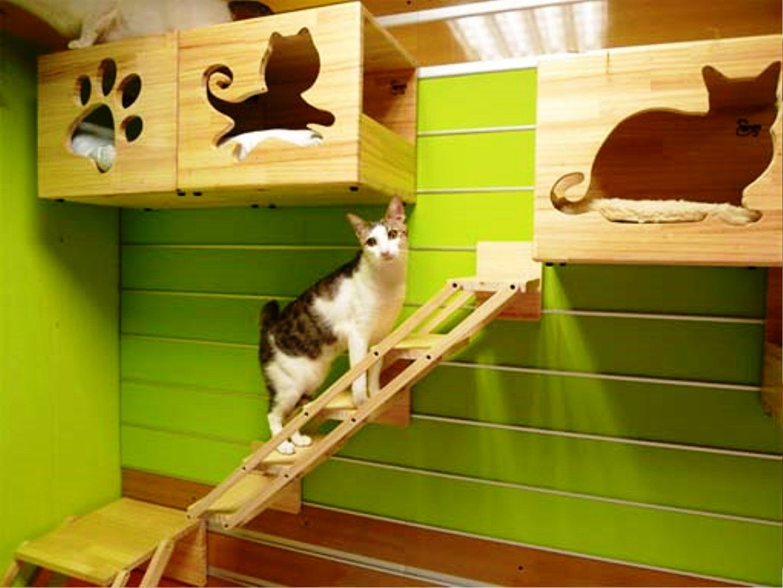 Indoor Cat House Pet House Design Pinterest Cat