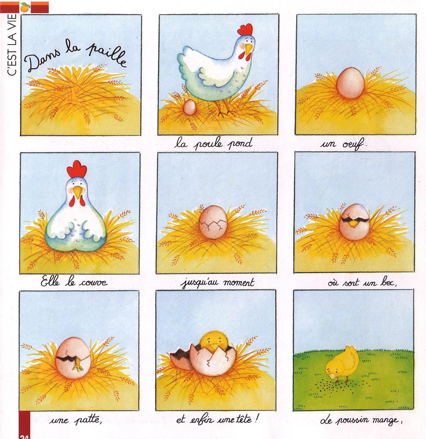 De Kip En Het Ei Cyclus