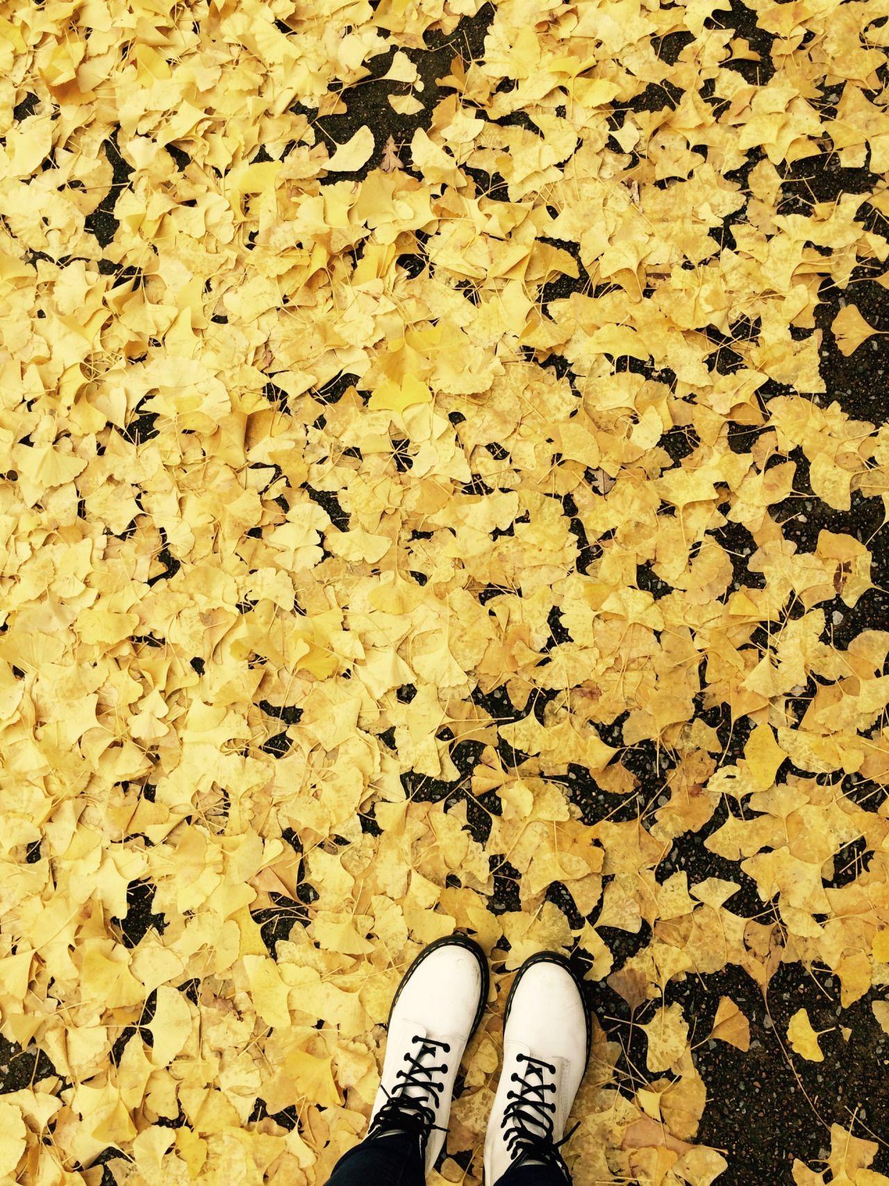 yellow aesthetic Tumblr Hufflepuff Aesthetic
