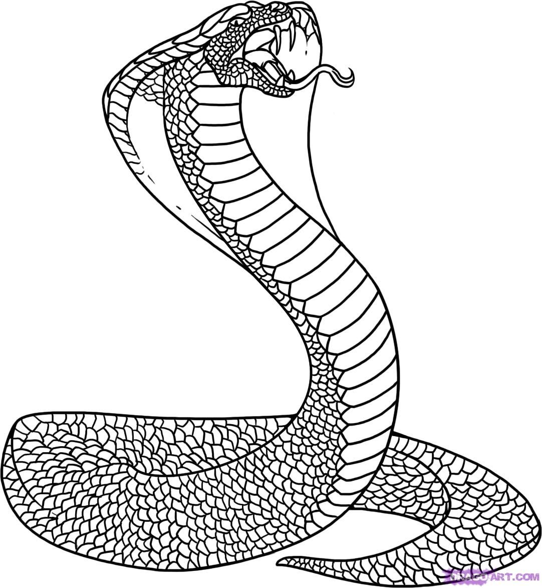 snakes online coloring pages and online coloring on pinterest