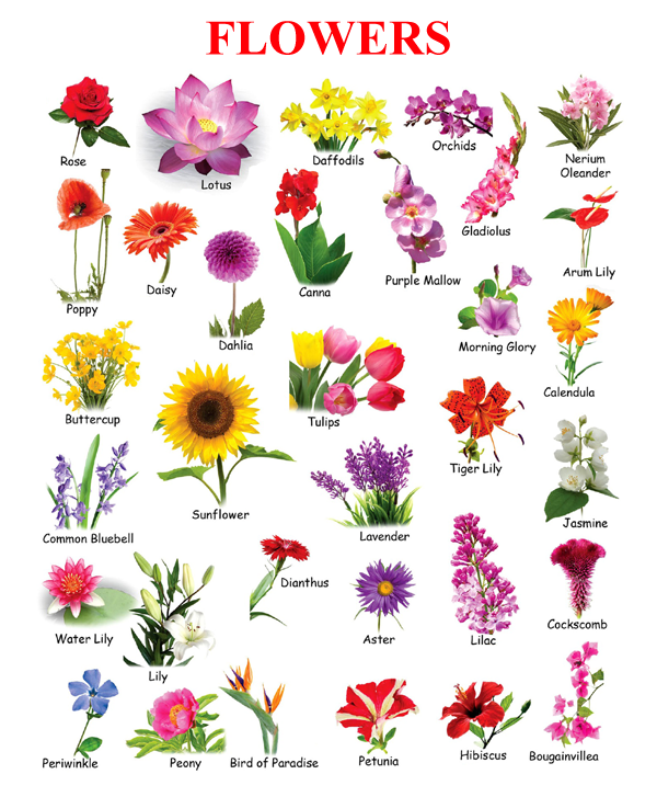 flowers in picture for kids Поиск в Google