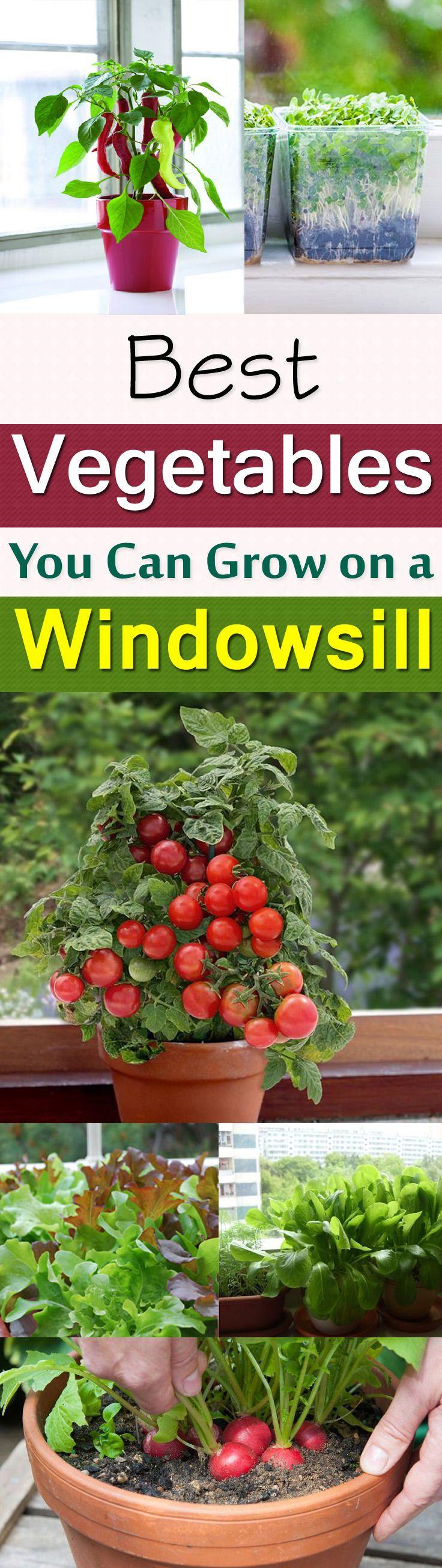 11 Best Vegetables To Grow On Windowsill Organic