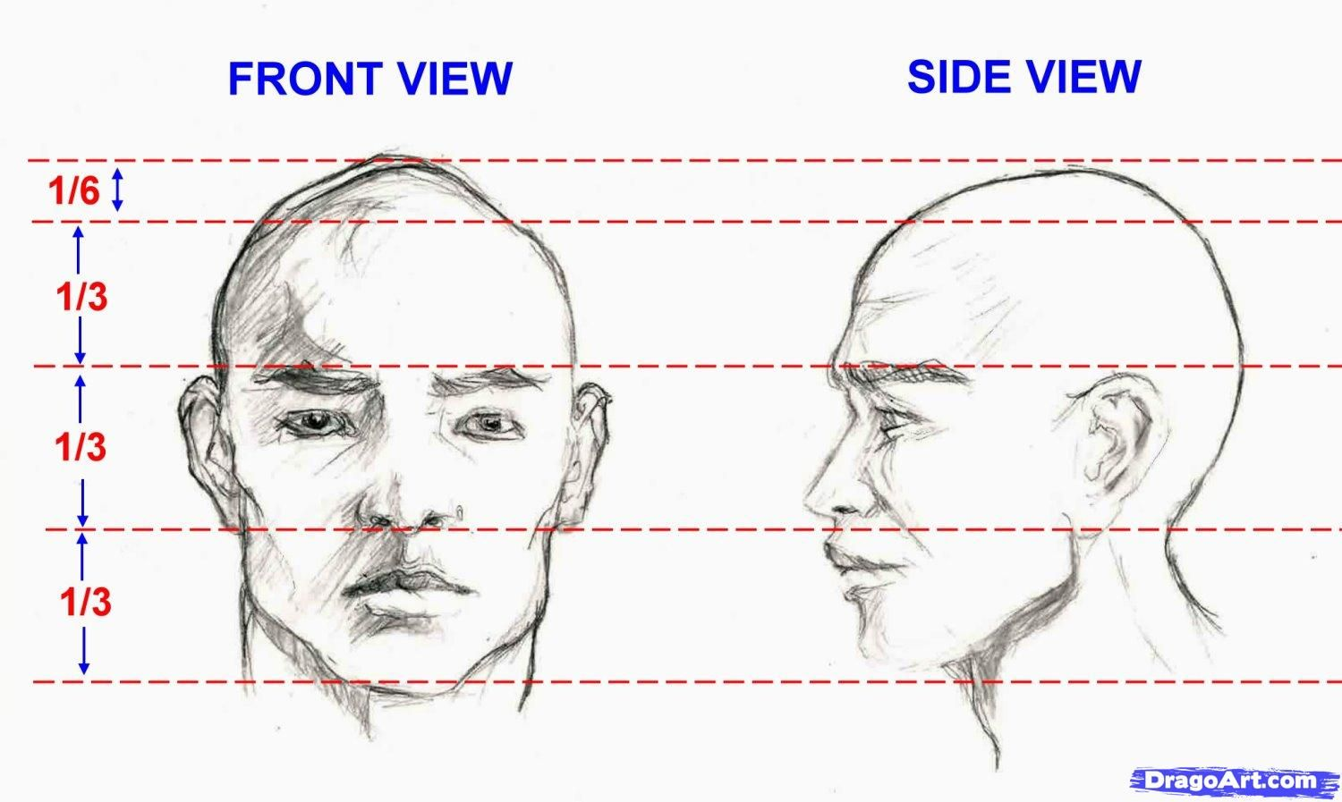 How To Draw The Proportions Of A Face Description From