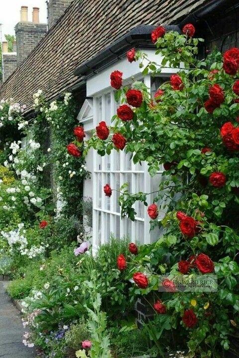 Love the red climbing rose creating garden of eden