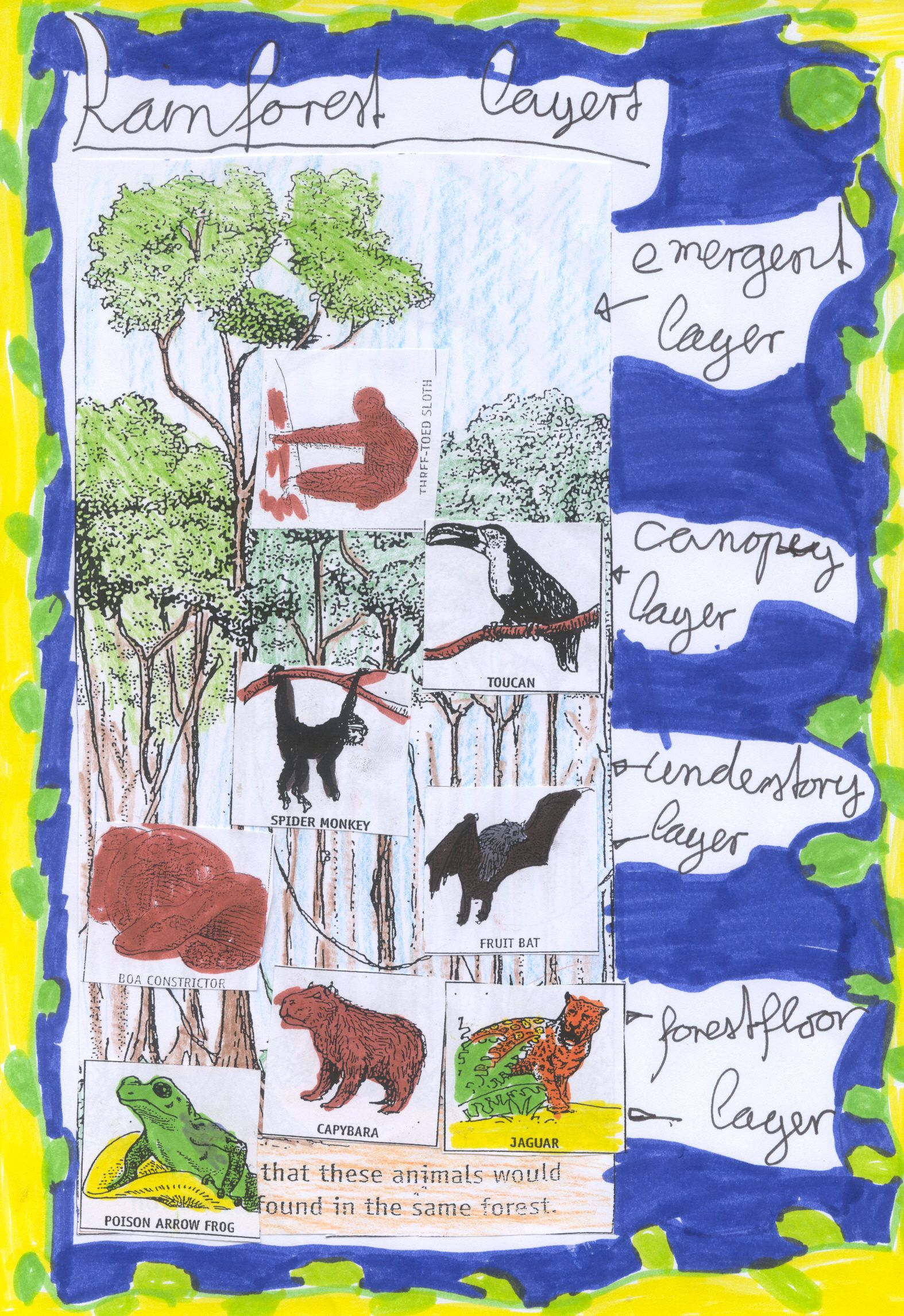 Layers Of The Rainforest Collage