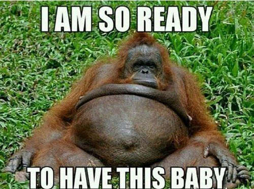 Image result for third trimester meme